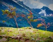 Trees at Glacier National Park a Fine Art Photo
