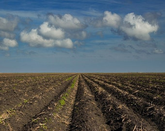 Farm Furrows in a Southeast Texas Field below a Cloudy Blue Sky - A Rural Agricultural Fine Art Country Landscape Photograph