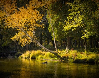 Autumn Fall Scene on the Little Manistee River a Salmon Trout Steelhead Stream by Manistee Michigan No.0880 - A Landscape Photograph