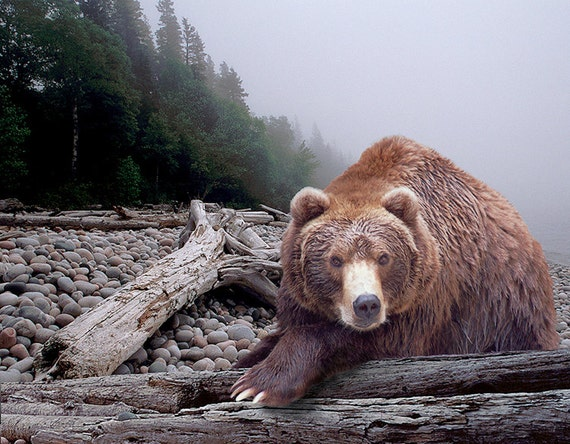 Facing the Grizzly Bear on the Beach - Some Days You Eat the Bear, Some Days the Bear Eats You - A Nature Wildlife Animal Photograph