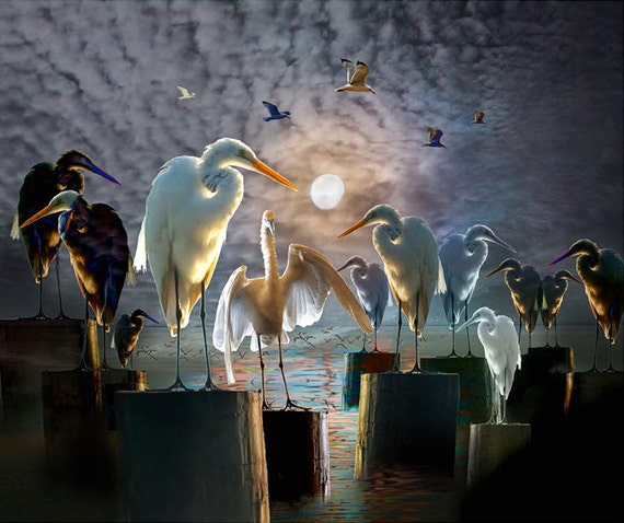The Gathering of Birds a Composition with Egrets and Gulls by the Everglades National Park in Florida a Surreal Bird Fantasy Photograph