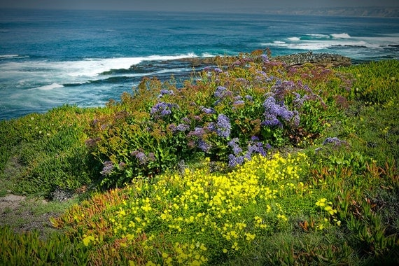 Colorful Flowers along the seashore at La Jolla California No.0203 - A Flower Seascape Photograph