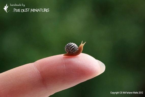 Zebra Snail - GARDEN RANGE