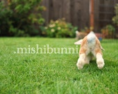 Bunny, You're Behind - Fine Art Photography Print - baby rabbit hopping in the grass