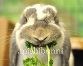 Bunny, You Have Something in Your Teef - Fine Art Photography Print 5x7 - silly lop rabbit eating parsley