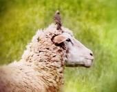 Ewe and Me Photograph - Sheep Lamb Photography - Farm Animal and Bird - Green Taupe - Wool Fleece - Companion Companionship Friendship
