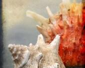 Two Shells - Beach Photography - Seashells Ocean Marine Coastal - Square Format TTV - Coral Gray Sand - Beach House Decor Photograph