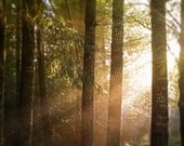 Enter The Forest I - Photography Decor - Enchanted Woodland - Dawn Morning Sunrise Dramatic Lighting Trees Nature Mist Fog Moss Green Brown