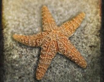 Starfish - Photograph Photography - Marine Ocean Sea Beach Sand Coastal - Neutral - Tide Pool - Summer