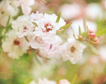 Wax Poetic - Garden Photograph Floral Photography - Spring Pastel Pink Green Wax Flower Romantic Shabby Chic Pretty Decor Girls Room