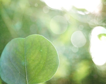 New Leaf - Photography Photograph - Fresh Start, New Year, New Day, Change - Green Leaves Tree - Resolutions - Eucalyptus Spring