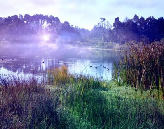 Where I Live - Photograph Photography - Peaceful Tranquil Pond - Jewel Tones - Mist Calm Sunrise Daybreak - Teal Purple Emerald