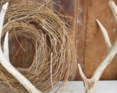 Lovely Weathered Rustic Deer Antlers and Partial Skull