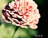 Pink Flower- 5x5 Photograph - Love