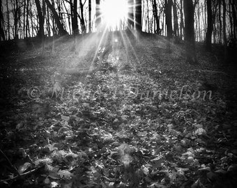 Black and White Photograph Light in the Forest 8x10
