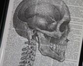 BOGO SALE Skull Print Dictionary Art Upcycled Wall Art 8 x 10