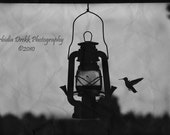 Hummingbird - 5x7 Black and White Photograph