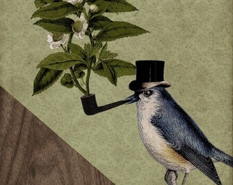 Bird Prints - A Bird and His Pipe 8x10 Art Print