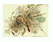 "The Flycatcher, Print of Watercolor of a Flycatcher (Bird) 8""x10"""