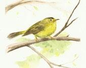"""Wilson's Warbler, Original Watercolor of Beautiful Yellow Song Bird 6""""x9"""""""