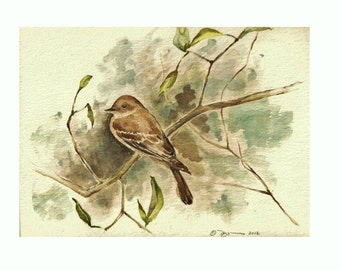 "The Flycatcher, Print of Watercolor of a Flycatcher (Bird) 8""x10"""