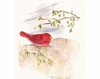 "Summer Tanager, Original Watercolor Painting 6""x9"""