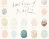 BIRD EGGS of AUSTRALIA