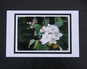 Apple Blossom Photo Greeting Card