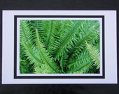 Blank Greeting Card with Photo of Sword Fern Plant