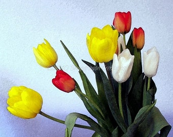 Bouquet of Tulips yellow, Red, White 8x10 Digital Art Print