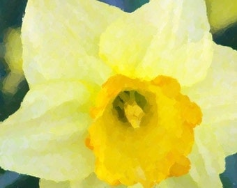 Yellow Daffodil Closeup 8x10 Digital Watercolor Print