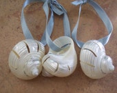 Coastal Ornament- Polished Cut White Sea Shell Ornament-Cut Turbos Shell-Great for Christmas, Beach Weddings, and Decorating