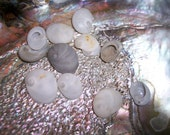 Beautiful Small White Shells/ White Baby Ear/ Sea Snail/ Sinum perspectivum/ Hand Selected off Beach Newborns Ear Variety Loose Shell Supply