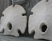 Rustic Mexican Keyhole Sand Dollar Loose Sea Shell and Sea Life Supplies for Coastal Decorating