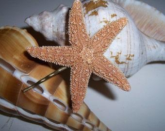 Mermaid Hair Accessories Real Sugar Sea Star Starfish Bobby Pin with Antiqued Brass for Coastal Beach Wardrobe
