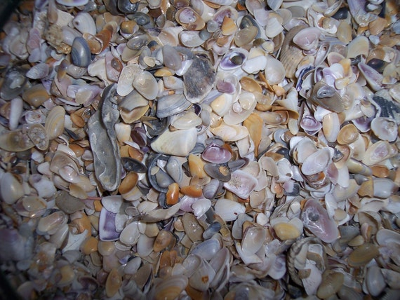 Coastal Home Decor Fabulous Shell Sand Tiny Little Shells for crafts, decorating, candle making, jewelry supplies