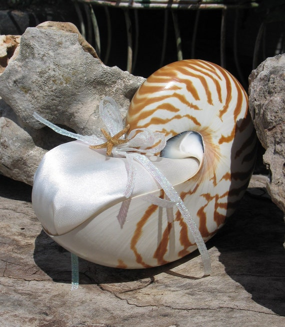 Chambered Nautilus Shell Alternative Ring Bearer Pillow Beach Destination Wedding Keepsake Pearl or Natural Tiger Seashell ANY Color Theme
