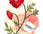 Red Poppy - Archival art print