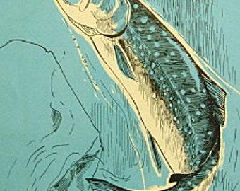 Vintage Blue Fish Book Plate Paper Illustration - Dolly Varden Char