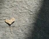 a found heart 5 x 7 print