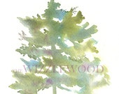 Pine Tree Watercolor 8 x 10 Giclee Print