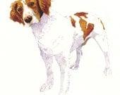 Springer Spaniel  (8x10 Watercolor Giclée Print)