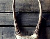 skinny deer antlers aka horns (treasury item)