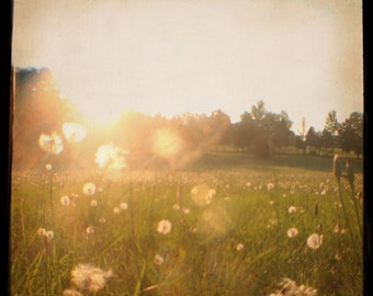 Dandelions at Sunset - Dreamy - Nostalgic - Summertime - Sunflare - Wishes