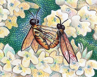 "Flies Pen and Ink Drawing - Color Pencil Art - Hydrangea Art - Insect Art - Fly Illustration - Insect Wall Art - 5x7"" Wall Decor"