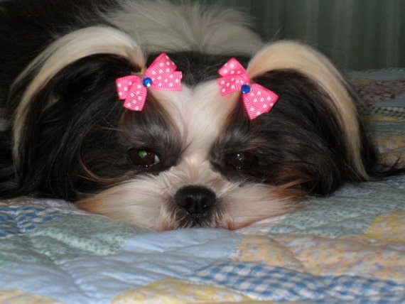 Puppy Dog Bows 20 X Small All Pairs