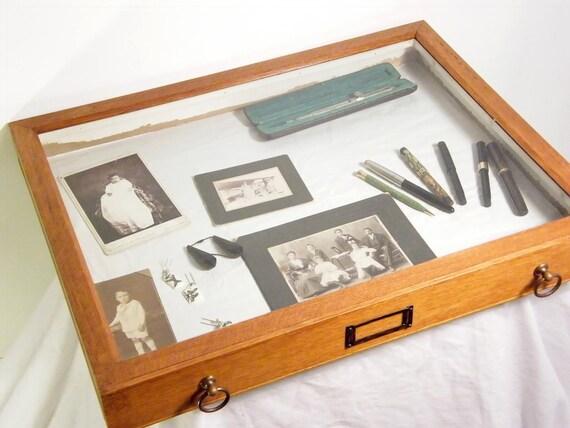 Wooden entomology drawer showcase