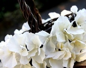 Custom Basket with Ivory Hydrangeas. Brown Flower Girl Basket for Weddings