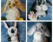 Custom made Artist Mini Lop Rabbit Soft Sculpture