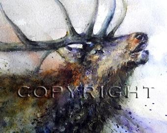 ELK Watercolor Print, Elk Painting by Dean Crouser